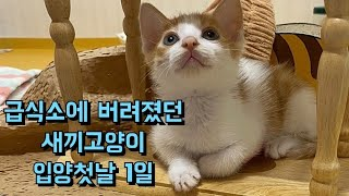급식소에 버려져 울고있던 새끼고양이.. 썸타오다 오늘부터1일~~