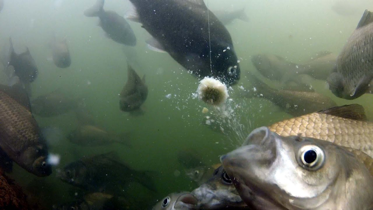 へら鮒釣りにて...食い逃げ&向こうアワセの水の中 - YouTube