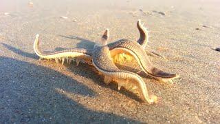Если Вы Увидите Это на Пляже, Зовите На Помощь Как Можно Громче!