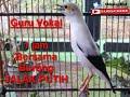 1 Jam Masteran Burung Jalak Putih Terbaik Masteran(.mp3 .mp4) Mp3 - Mp4 Download