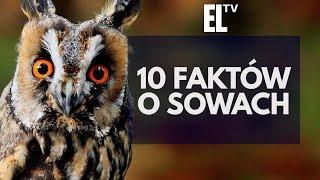 10 faktów o sowach