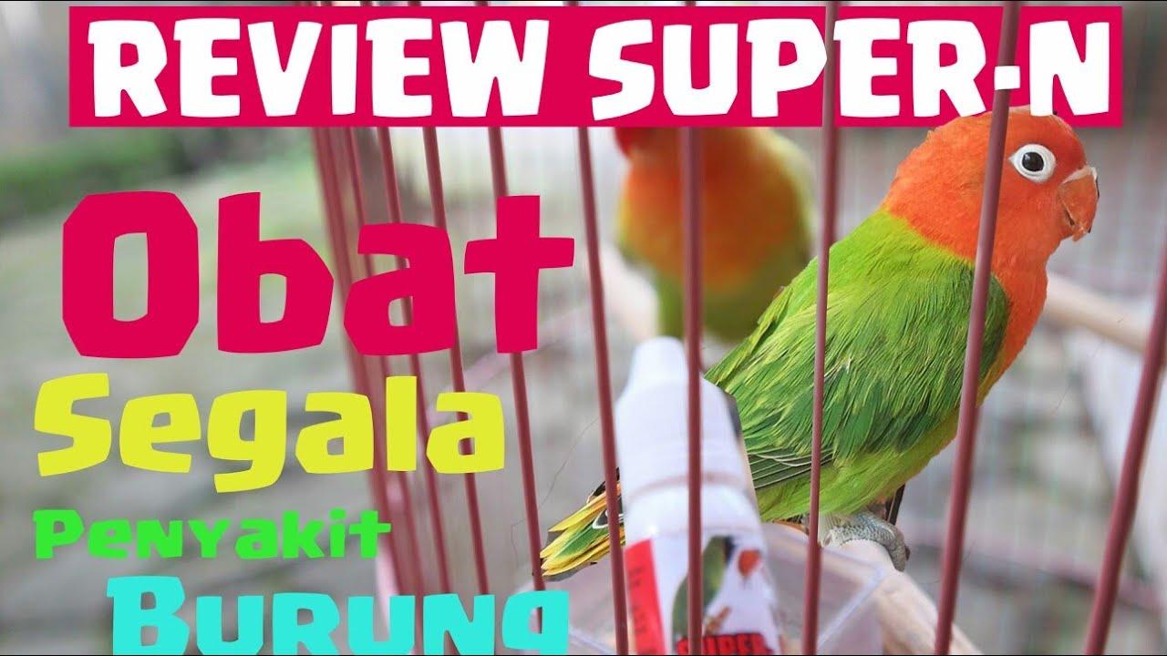 Super N Super Kicau Obat Burung Sakit Infeksi Pencernaan Diare Berak Kapur Darah Air Pernafasan Youtube