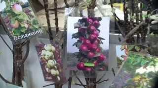 видео 34-я специализированная выставка-ярмарка «Фазенда»