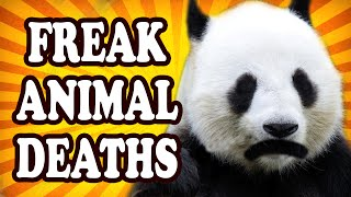 Top 10 Animals Who Died In Tragic Freak Accidents — TopTenzNet