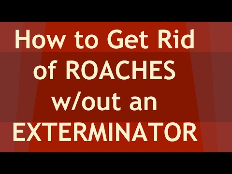 How To Get Rid Fo And Kill Roaches Naturally