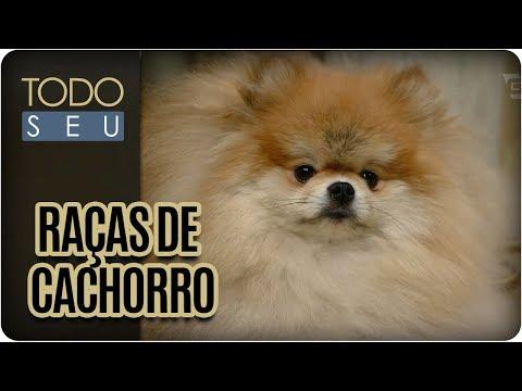 Origem Das Raças De Cães Mais Populares No Brasil | Todo Pet - Todo Seu (24/10/17)