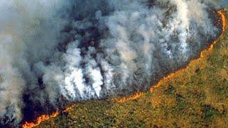 क्या होगा अगर अमेज़ॉन जंगल जल कर ख़त्म हो गए? What if Amazon Rainforest Burned