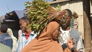 Madagascar : quand le khat gagne du terrain