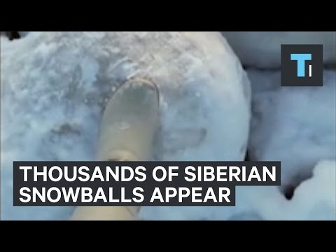 Thousands of snowballs showed up in Siberia