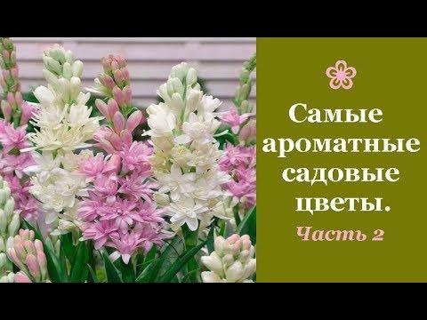 ❀ Самые ароматные садовые цветы. Часть 2