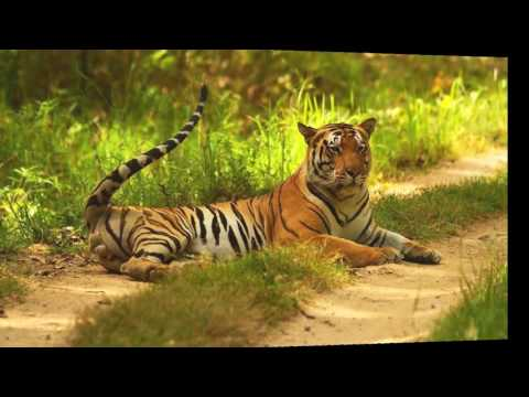 Top Wildlife Sanctuaries in India | Top National Parks in India