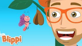 Butterfly Song | Blippi | Kids Learning Songs | Cartoons For Kids | Educational kids Videos