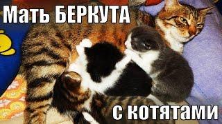 Котятам 3 недели | Мать Беркута с маленькими котятами  Забавные котята - умилительное видео