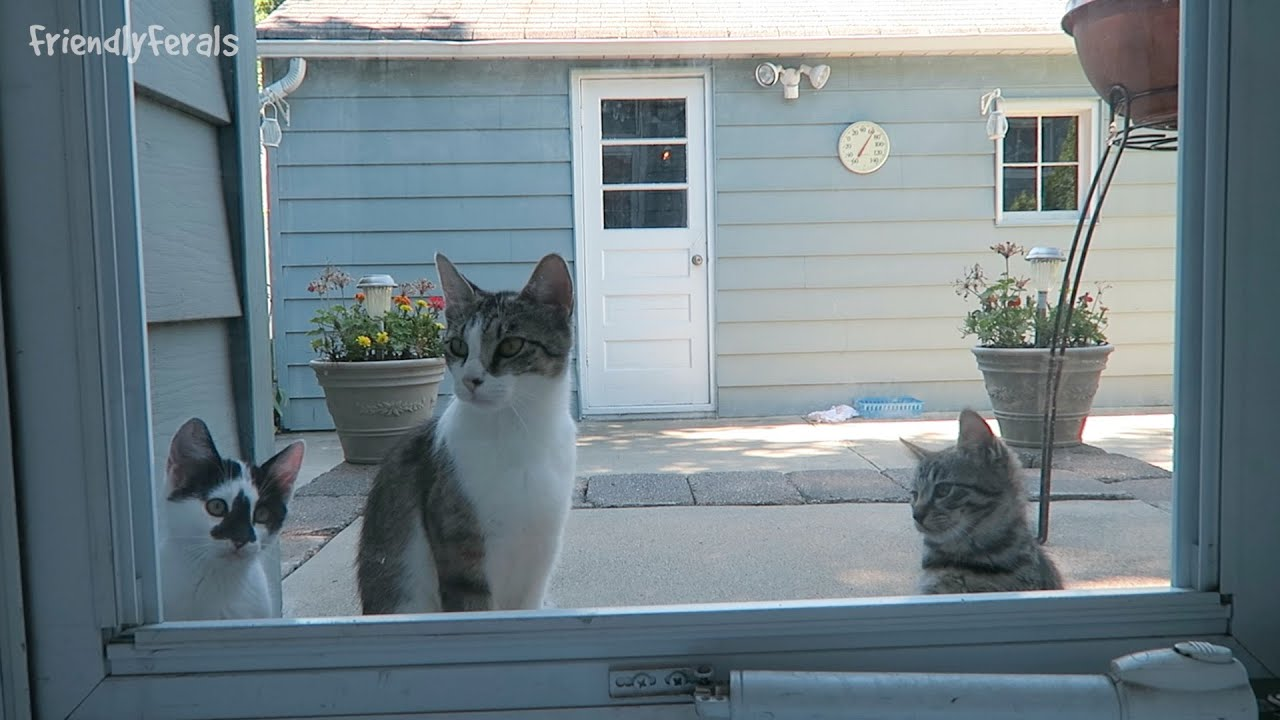 Feral Kittens By The Back Door