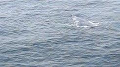 Whales At Casino Cruise Lynn MA 07-03-06