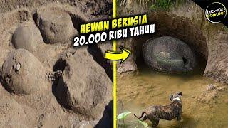 Sering Dikira Batu Biasa, Inilah Penemuan Cangkang Armadillo Purba Berusia Puluhan Ribu Tahun...