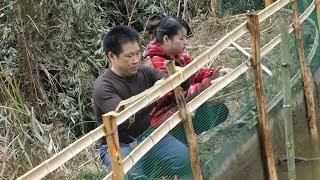 Gambar cover 为今年的丰收,秋子和爸爸在鱼塘边做起了防护栏,你猜这网多少钱