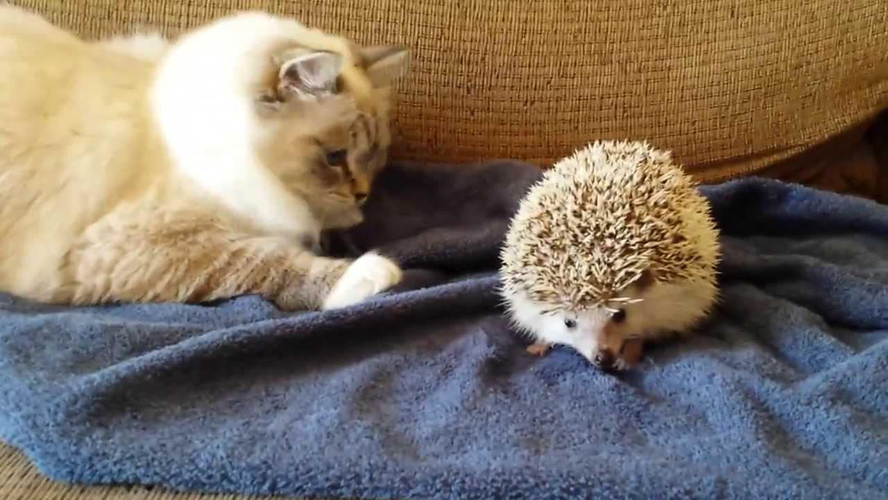 Baby Vs Cat Gif