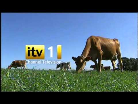 Channel TV ident 2011 - Guernsey Cow