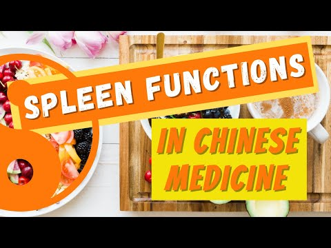 spleen function in tcm - youtube, Human Body
