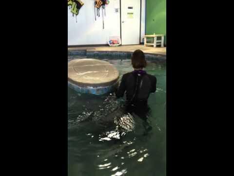 Dallas swimming therapy