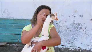 Achamos no Brasil - Samukinha descobre um xerife do mundo animal