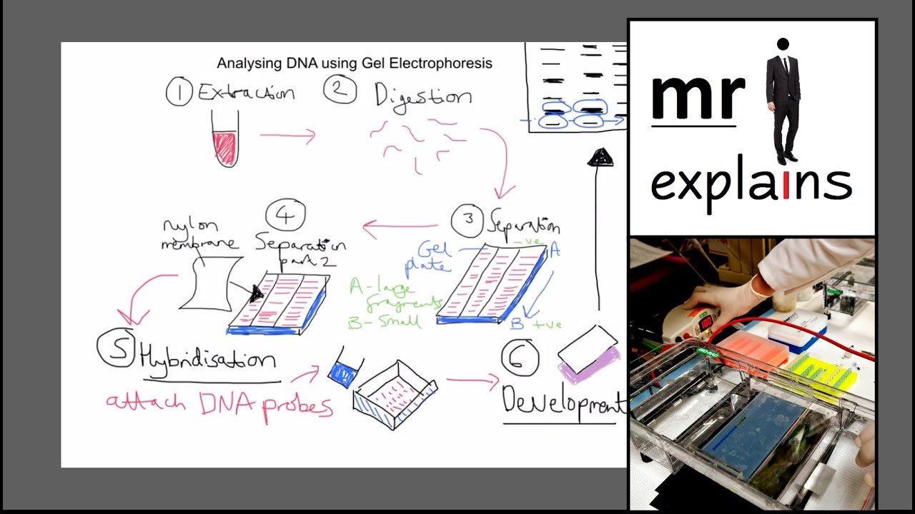 an analysis of dna Looking for online definition of dna analysis in the medical dictionary dna analysis explanation free what is dna analysis meaning of dna analysis medical term.