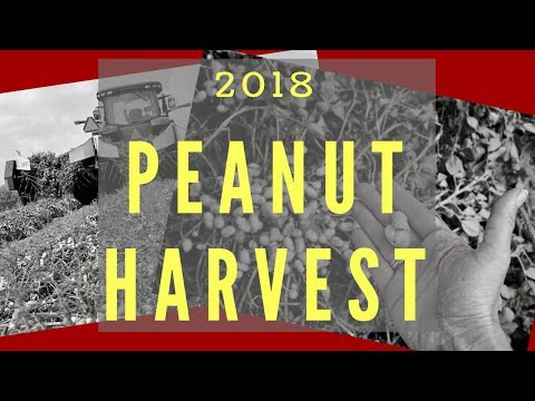 Lawrence County 2018 Peanut Harvest