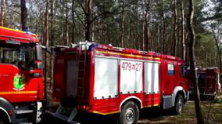 Alarmowo do pożar lasu w Legionowie | 479[M]24 i 479[M]27 | OSP CHOTOMÓW