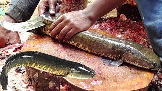 Fastest Fish Cutting Skills | Live Murrel Fish Fillet | Fish Clean And Fillet Videos