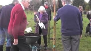 Elm Tree Planting Nov 2012