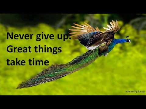 Success Quotes –  Never Give Up!   #Successquotes  #Never #Give #Up   #Quotes