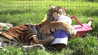 FAQ Friday: Cooking For Big Cats