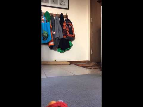 Screamin' Elmo