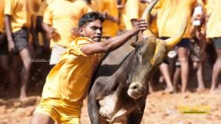 More celebrities voice their support for Jallikattu