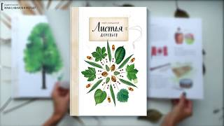 «Мой гербарий.Листья деревьев». Все о том, как сделать гербарий