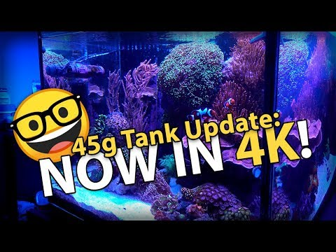 Bad & Good News! Tank Update in 4K!! (45g - 3/25/2018)