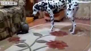 приколы про животных 2013.собаки смешные
