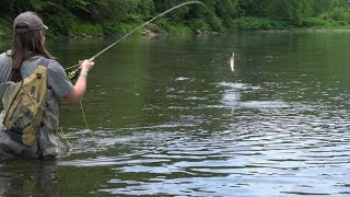 Fly Fishing Pennsyvania for Trout 2018