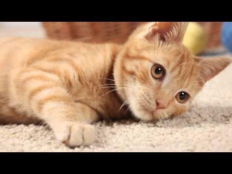 Steam Carpet Cleaner Henderson NV | Call 702-567-0016