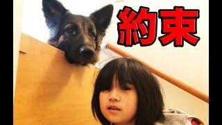 grandchild and German Shepherd dog 孫娘りりか、一旦学校行く道から戻...