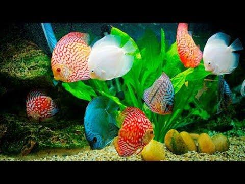 Kĩ năng chọn, nuôi cá cảnh - Vui Sống Mỗi Ngày [VTV3 -- 25.10.2012]