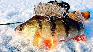 Зимняя рыбалка на окуня. Февраль 2020 года.