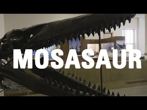 Mosasaur - South Dakota School of Mines - Museum of Geology
