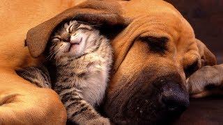 Забавные фото дружбы животных разных видов | Очень милое видео