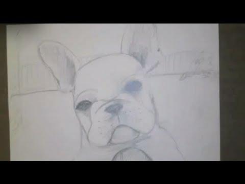 Draw A French Bulldog