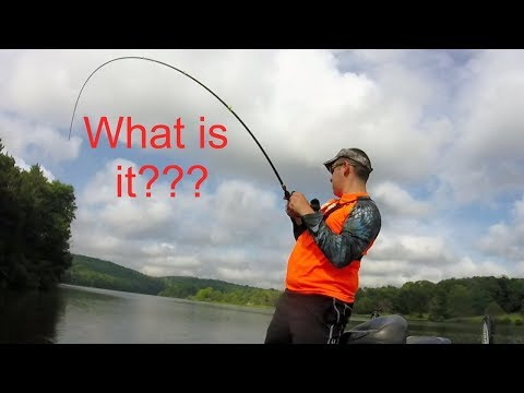 PA Bass Casters Lackawanna State Park Fishing Tournament (Surprise Catches)