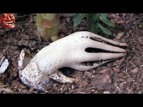 Giật mình những loài thực vật giống bộ phận cơ thể người - Chuyện lạ kỳ quái