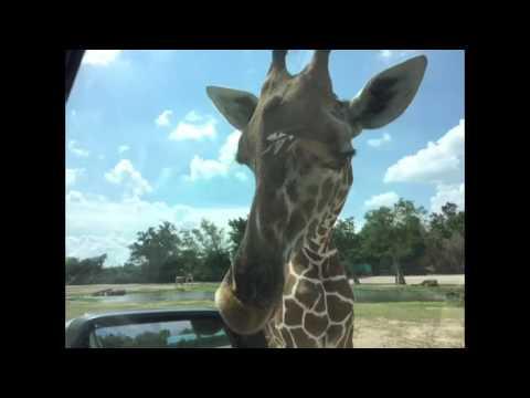 Open Zoo Thailand
