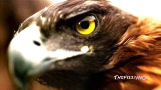 Blackmill - Friend ( Music Video HD ) Senses Of Nature 3